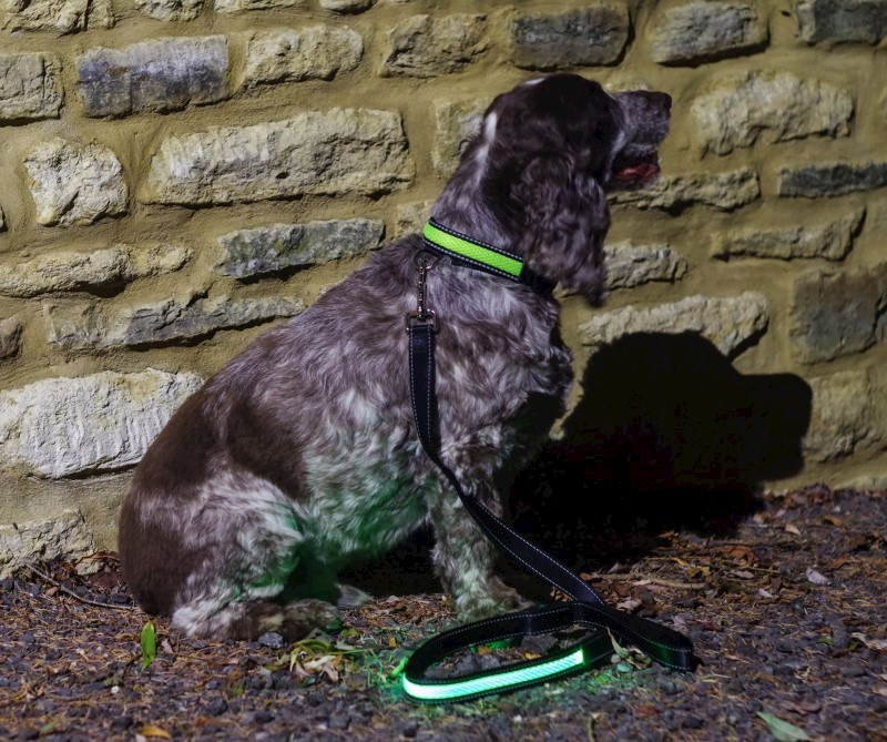 IA LED Light Up Pet Leads - Hondenriem - Groen