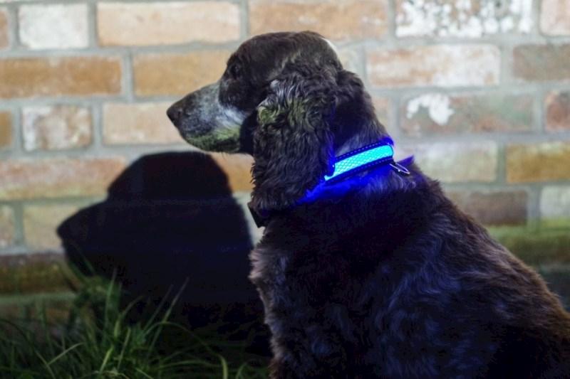IA LED Light Up Pet Collar - Hondenhalsband - S/M - 31-41cm - Blauw
