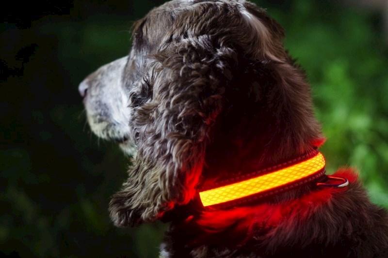 IA LED Light Up Pet Collar - Hondenhalsband - S/M - 31-41cm - Roze