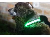IA LED Light Up Pet Collar - Hondenhalsband - S/M - 31-41cm - Groen