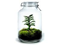 Growing Concepts DIY Duurzaam Ecosysteem Weckpot 5L - Zamioculcas Zamiifolia - H28xØ18cm