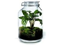 Growing Concepts DIY Duurzaam Ecosysteem Weckpot 5L - Calathea - H28xØ18cm