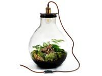 Growing Concepts DIY Duurzaam Ecosysteem Giants Ecolight XL - 20 Liter - Botanische Mix - H42xØ40cm