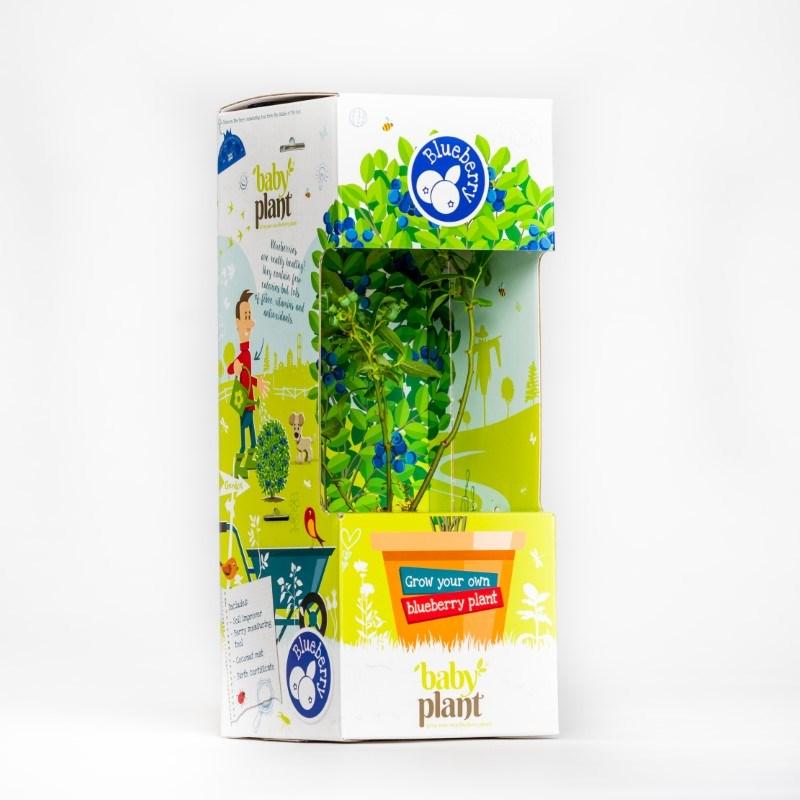 Baby Plant Blauwe Bes