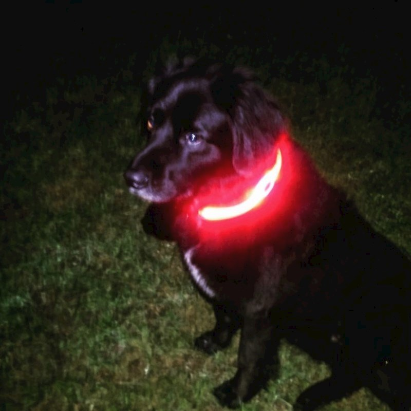 Visto PetSaber Dog Collar - red