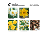 Bloembollenpakket Narcissico